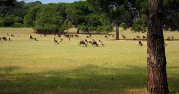 Parc national Brijuni