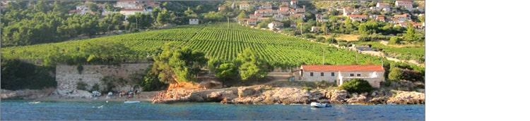 vins-dalmatie